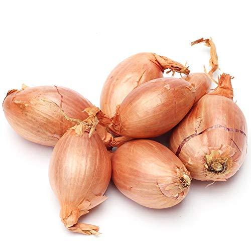 Semillas de chalota - Allium cepa - 855 semillas