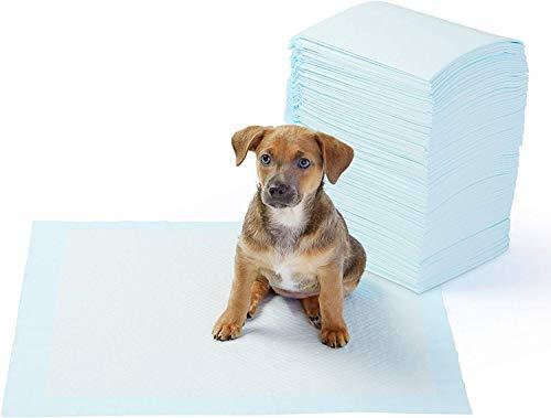 AmazonBasics - Toallitas de entrenamiento para mascotas (tamaño regular, 100 unidades)