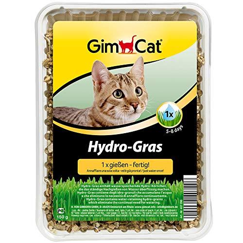 GimCat Hydro-Gras – Hierba para gatos de plantación controlada – De fácil cultivo en 5-8 días regando 1 sola vez – 1 bandeja (1 x 150 g)