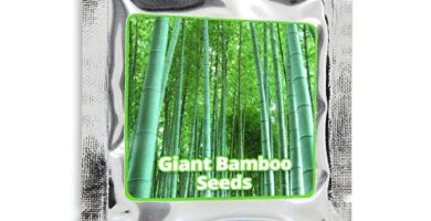 Brotes De Bambu Mercadona