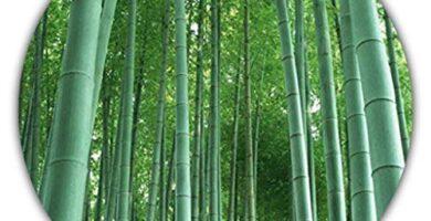 CañAs Bambu Leroy Merlin