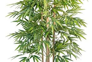 CañAs De Bambu Decoracion Leroy Merlin