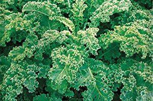 Kale Mercadona