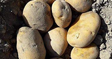 Patata Agria Mercadona